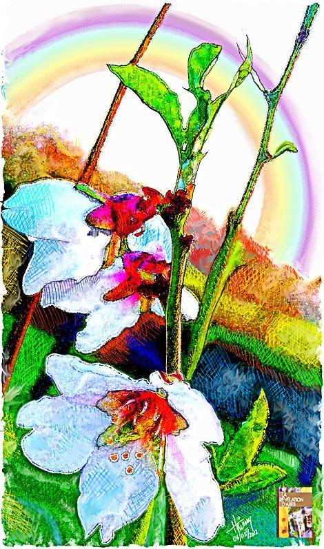 """""""c'est le printemps, le renouveau, l'espérance"""" (fleurs d'amandiers)."""